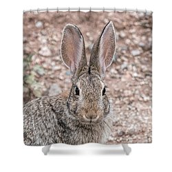 Rabbit Stare Shower Curtain