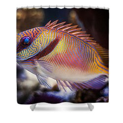 Rabbitfish Shower Curtain
