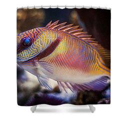 Rabbitfish Shower Curtain by Rikk Flohr