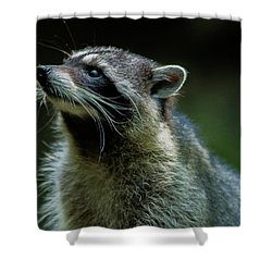Raccoon 1 Shower Curtain