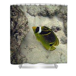 Raccoon Butterflyfish Shower Curtain by Michael Peychich