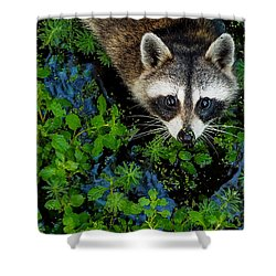 Raccoon Looking Up Shower Curtain