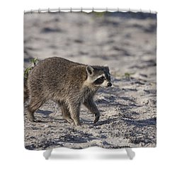 Raccoon On The Beach Shower Curtain