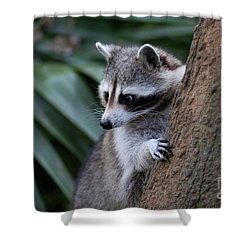 Raccoon Shower Curtain by Scott Pellegrin