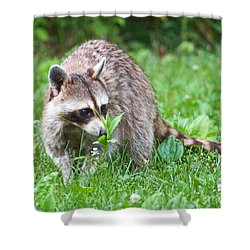 Raccoon Smelling Flowers Shower Curtain