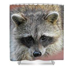 Raccoon's Gorgeous Face Shower Curtain