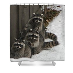 The Three Stooges - 2 Shower Curtain