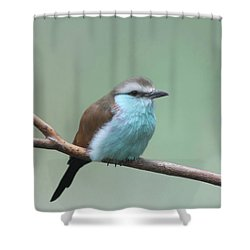 Racket-tailed Roller V2 Shower Curtain