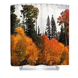 Radiant Autumnal Forest Shower Curtain