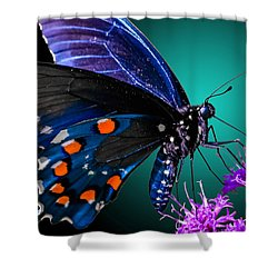 Shower Curtain featuring the photograph Radiant Wings by Brian Stevens