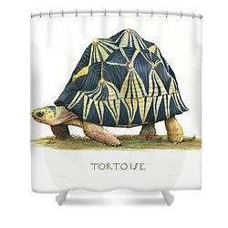 Radiated Tortoise  Shower Curtain by Juan Bosco