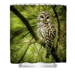 Radiating Barred Owl Shower Curtain