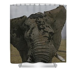 Shower Curtain featuring the photograph Raging Bull by Gary Hall