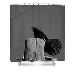Raging Crow Shower Curtain