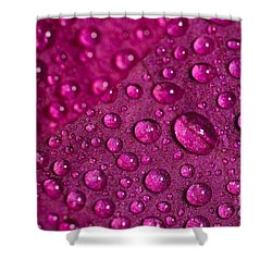 Rain And Bougainvillea Petals Shower Curtain
