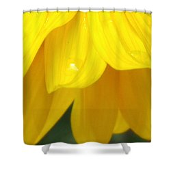 Rain And Sunshine On A Colorado Wildflower Shower Curtain