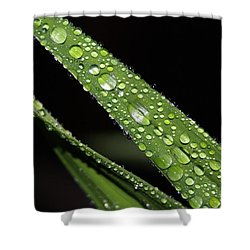 Rain Drops 1 Shower Curtain