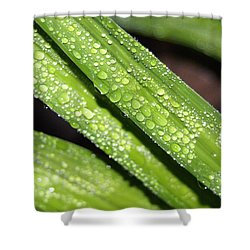 Rain Drops Shower Curtain