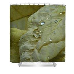 Rain Drops On A  White Poinsettia Shower Curtain