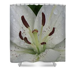 Rain Drops On Lily Shower Curtain
