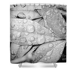 Shower Curtain featuring the photograph Rain Drops by Robin Coaker
