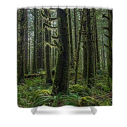 Rain Forest Of Golden Ears Shower Curtain