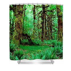 Rain Forest, Olympic National Park Shower Curtain by Panoramic Images