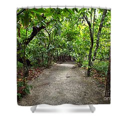 Rain Forest Road Shower Curtain