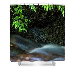 Rain Forest Stream Shower Curtain