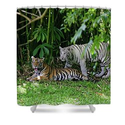Rain Forest Tigers Shower Curtain