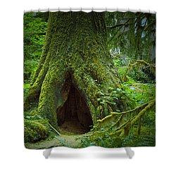 Rain Forest Walk 2 Shower Curtain