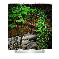 Rain Forest Walk Shower Curtain