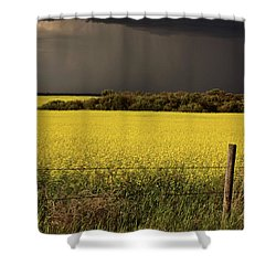 Rain Front Approaching Saskatchewan Canola Crop Shower Curtain by Mark Duffy