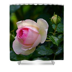 Shower Curtain featuring the photograph Rain-kissed Rose by Byron Varvarigos