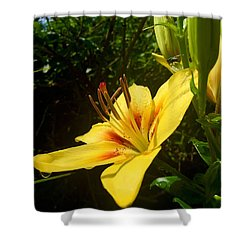 Rain Kissed Tiger Lily Shower Curtain