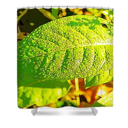 Rain On Leaf Shower Curtain by Craig Walters