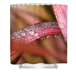 Rain Shower Shower Curtain by Trevor Chriss
