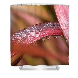 Rain Shower Shower Curtain
