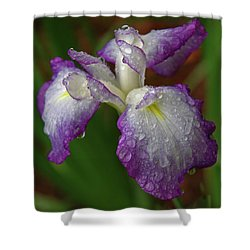 Rain-soaked Iris Shower Curtain
