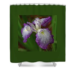 Rain-soaked Iris Shower Curtain