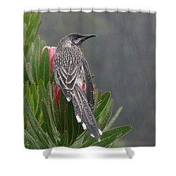 Rainbird Shower Curtain