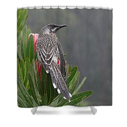 Rainbird Shower Curtain