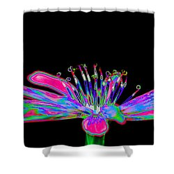 Rainbow Chicory Shower Curtain