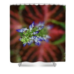Rainbow Coleus Shower Curtain