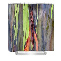 Rainbow Eucalyptus 13 Shower Curtain