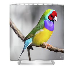 Rainbow Finch Shower Curtain