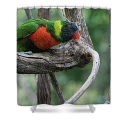 Rainbow Lorikeet #2 Shower Curtain