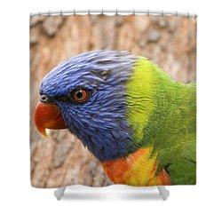Rainbow Lorikeet Shower Curtain by Mike  Dawson