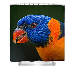 Rainbow Lorikeet Shower Curtain by Racheal  Christian