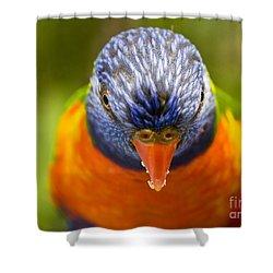 Rainbow Lorikeet Shower Curtain by Avalon Fine Art Photography